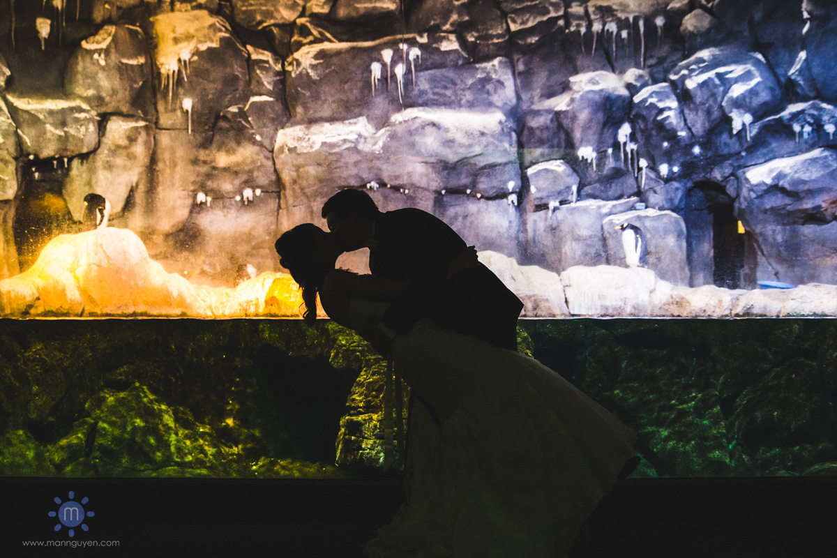 pittsburgh-wedding-photographer-ppg-aquarium-at-pittsburgh-zoo